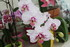 LE COIN DES ORCHIDEES