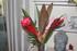 Nouveau bouquet