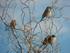 Les oiseaux sont là...