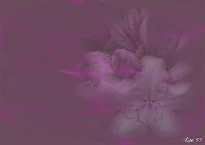 Rose-mauve avec lys