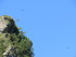 Jeune vautour : Gorges de Kaku