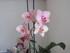 mon orchidée !!! 3ème florai
