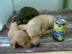 Batin,Baton, et Bata, à l'adoption