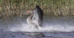 atterrissage sur le lac