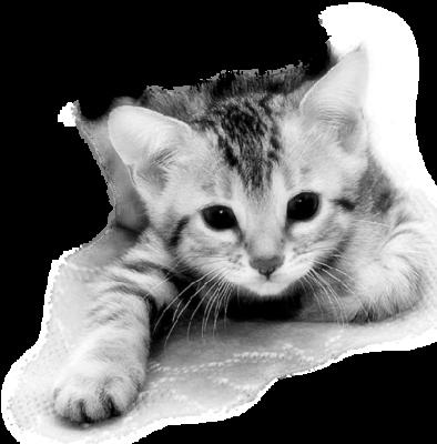 site chaton à DONNER