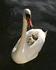 meli melo d'images : magnifiques oiseaux