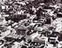 Centre-ville de Trois-Rivières en 1955
