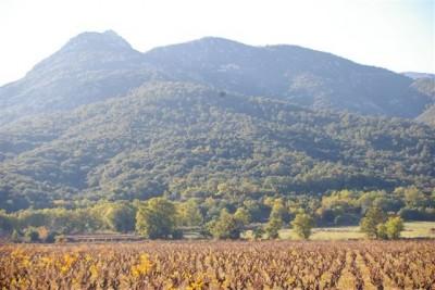 Montagne de N.D du Chateau au dessus de Sorède