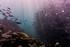 Curiosités marines: la vie en couleurs