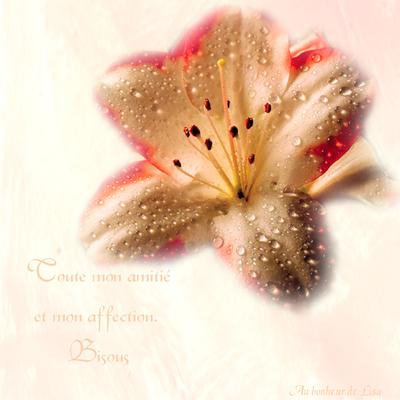 fleurdefeu
