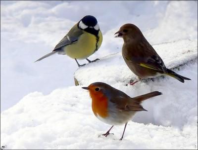 Bienvenue dans mon jardin secret for Les petits oiseaux