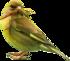 Des beaux petits oiseaux ....t
