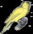 De beaux petits oiseaux ... tr