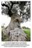 Un arbre pensif ....