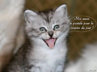 Résultat d'images pour gif un beau chat
