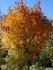 Les couleurs de l'automne ...