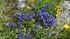 fleurs du vercors ...