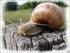 Jeannot l'escargot et heureux