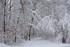 La Sibérie à deux pas de la ville (forêt