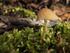 Quelques champignons^^