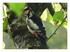 Les oiseaux dans le jardin de