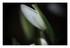 Mes qls fleurs...