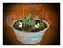 Mes plantes !