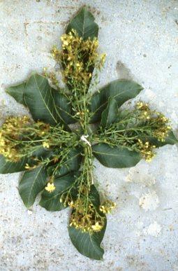 bouquet de la Saint Jean