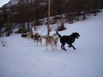 Alain et ses chiens.