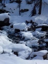 Cherchez encore les traces d'animaux... ils traversent le torrent...