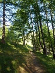 passée la b371, forêt de Mélèzes.
