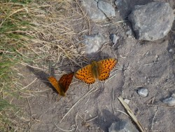 Papillons, suaterelles ... la vie fourmille.