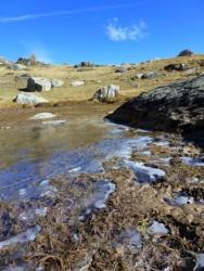 Le froid pique et gèle les bordures d'étang.