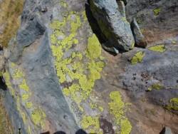 jaune sur du schiste...