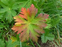 Juillet, couleur d'automne. (et pourtant nous attendons tous l'été!)