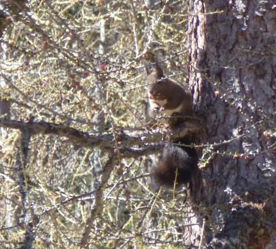Un écureuil...