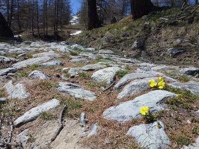 Des pensées dans les pierres du chemin...