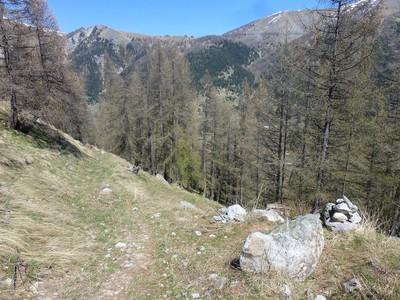 A droite le sentier Bicknell, je suis allée tout droit, par le chemin des bûcherons...