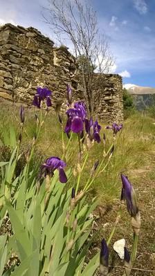 En montant, approchez vous des ruines, ne cueillez pas les Iris, admirez plutôt le paysage !