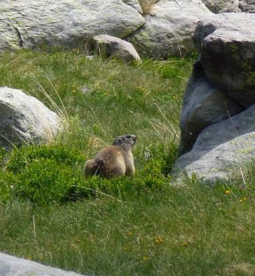 Croiser la marmotte
