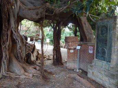 Passer sous le Ficus ...