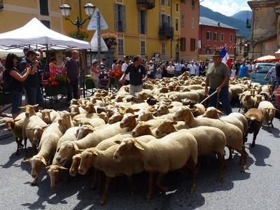 Passage du troupeau de brebis d'Armand Giordano dans le village