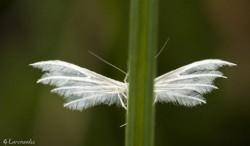 légèreté des ailes