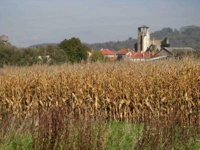 Moyenvic tapi derrière le maïs