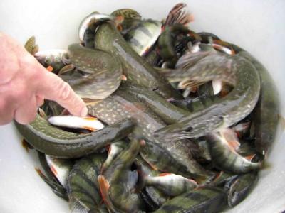 de beaux poissons