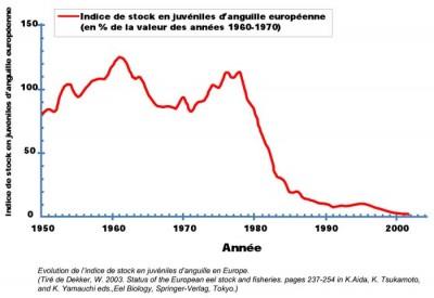 évolution des stocks 1950-2002