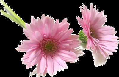 Spécial Déco : Les fleurs - Tubes thème