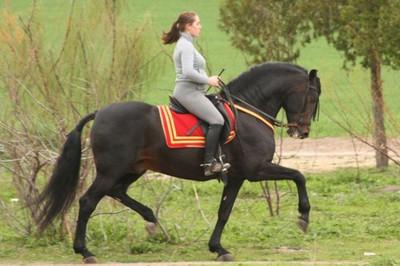 cheval espagnol nom